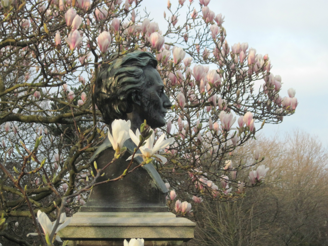 Magnolia in Stephens Green.jpeg