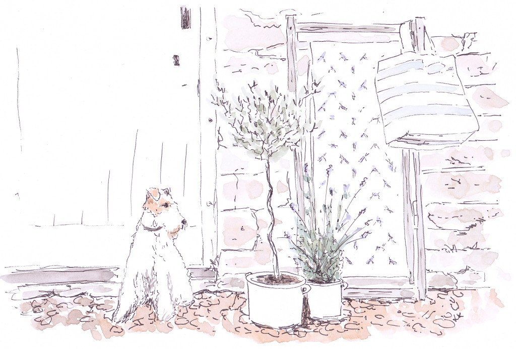 Plum & Ashby brand image featuring Bertie the wire-haired terrier illustrated in pen and ink with watercolour by Louise Keane of Amalfi White Living